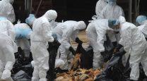 آنفلوآنزای مرغی